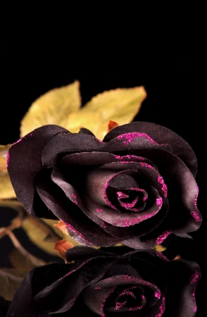 Black decor flowers on black table top Stock Photo - 15852531