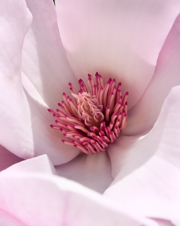 foiliage: Photo of magnolia blossom inside by macro shot