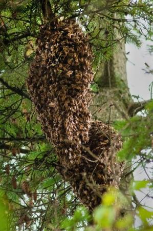 Grand lot d'abeilles couvrant il reine Banque d'images - 22333499