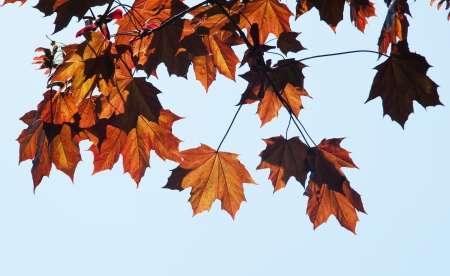 faa: Colorful faa leaves hanging from tree branch Stock Photo