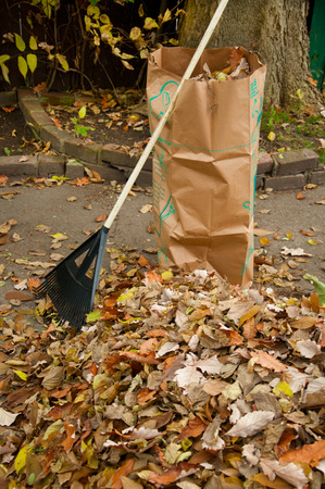 Working in yard raking fall leaves