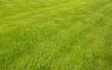 lawn: Green grass lawn with sunny and rainy days
