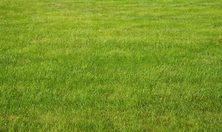 日当たりの良い芝生を緑の草と雨の日