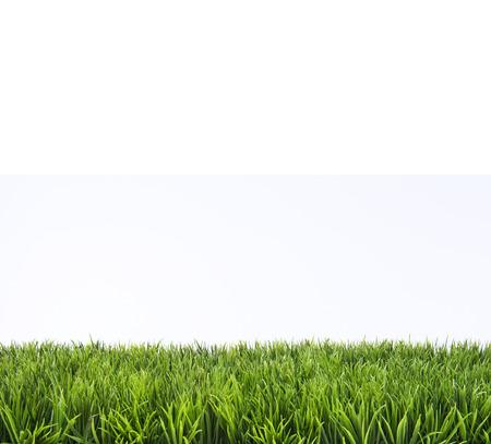 Green grass pelouse avec des journées ensoleillées et pluvieux Banque d'images - 36648751