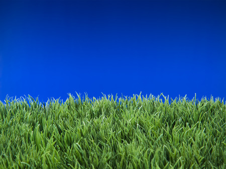 topsoil: Green grass lawn with sunny and rainy days
