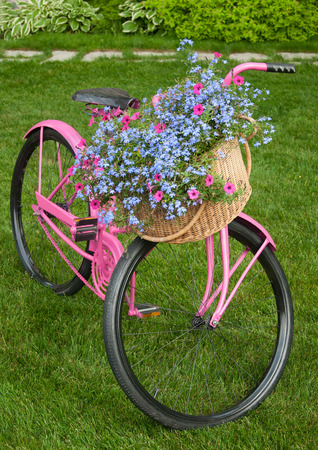 frontyard: Old pink bike as yard decor piece