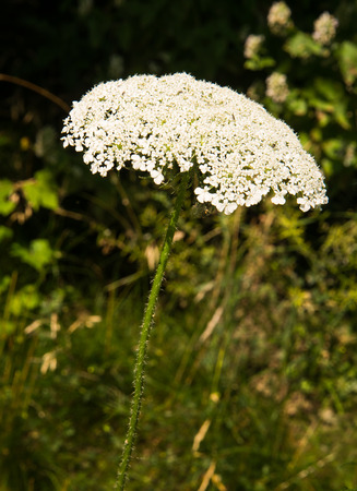 shore line: wild flowers along Detroit river shore line
