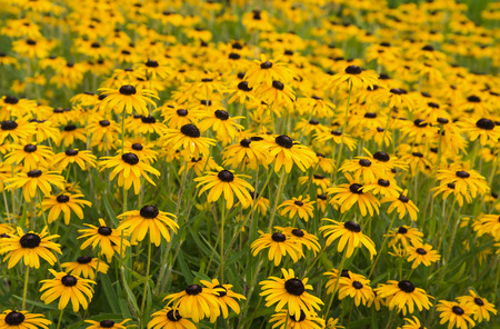 fields of flowers: Brightly colored summer wild frowers in garden Stock Photo