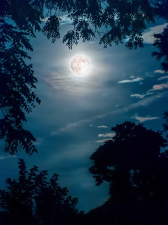 Super moon framed by tree branches