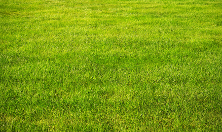 Green grass lawn with sunny and rainy days