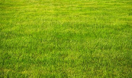 Prato erba verde con sole e giorni piovoso Archivio Fotografico - 83615236