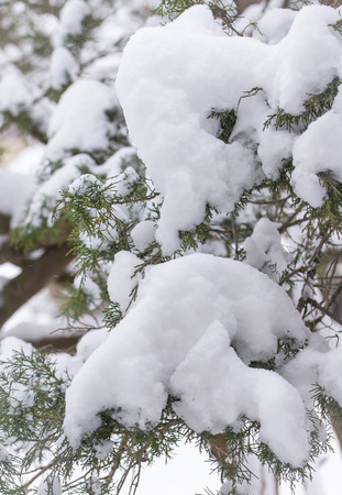 Snow on tree branches in midwest winter