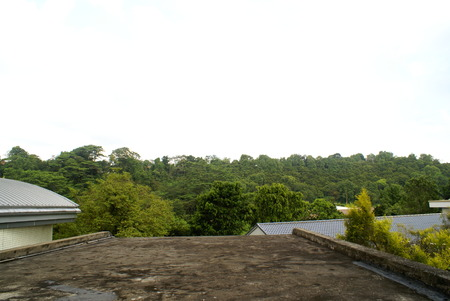 rooftops: Trees Beyond Rooftops