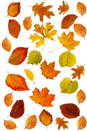 different autumn color leaves