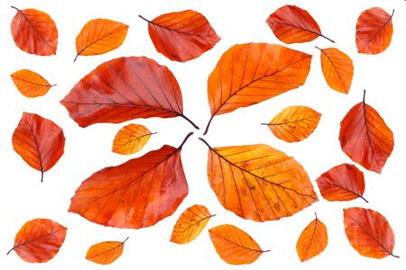 Diferentes hojas de color otoñal Foto de archivo - 88155483
