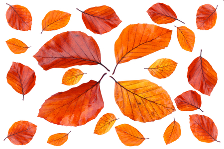 different autumn color leaves