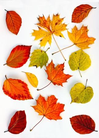異なる色の紅葉 写真素材 - 88038232
