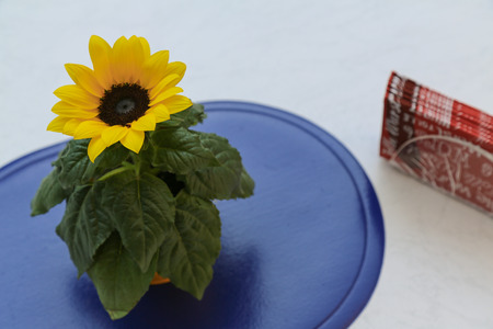 vibrance: A sunflower in a pot is standing on a blue mat with a tissue holder with red serviettesnapkins on the right side