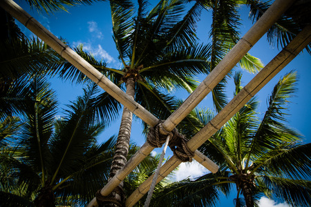 palmtrees: A peaceful moment under the palmtrees looking at the sky and the lush foliage through a bamboo fixture.