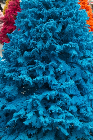 fake christmas tree: Shot of colored Christmas trees, flocked in blue, closeup, portrait