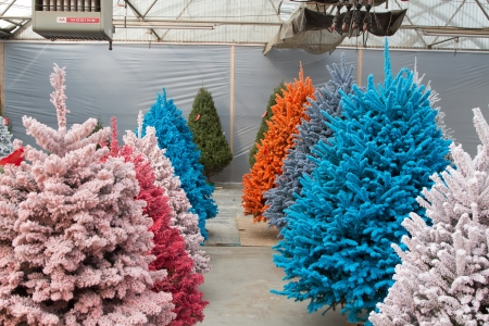 shot of colored christmas trees flocked in different colors stock photo 17405894