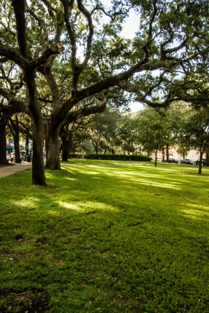 An uninhabited tree-lined park in downtown Savannah Stock Photo
