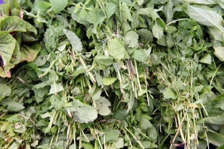 кинза: organic cilantro in bunches