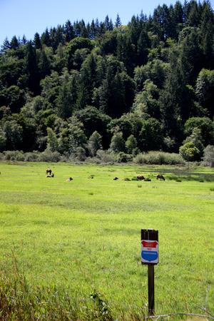 Roosevelt elk herd of cows with no trespassing sign