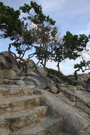 trees and rocks with stone steps Stockfoto