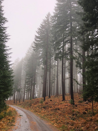 mountain road through a forest