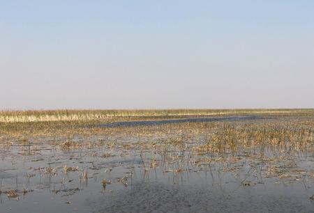 everglades water and grass pen flat open