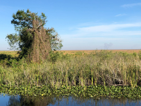 everglades water and sawgrass tree Stock Photo