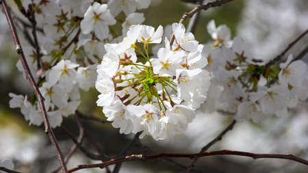 A white flowering tree blowing in the sunshine.