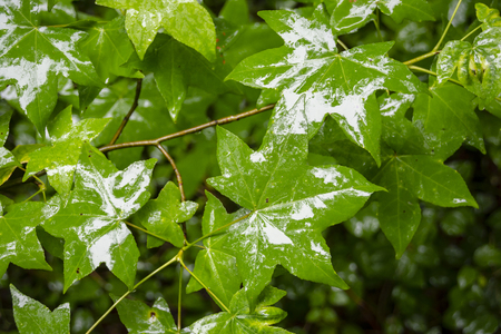 Green rain-soaked leaves reflect the daytime sky in a thick forest. Reklamní fotografie