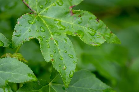 Rain drops reflect the sky on a green tree leaf.