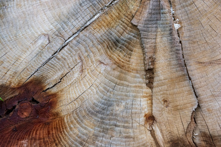 A textured pattern of a cut tree, showing many rings on its smooth surface.