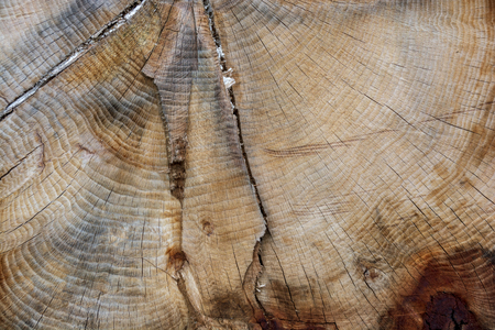 A textured pattern of a cut tree, showing many rings on it's smooth surface. Stock Photo