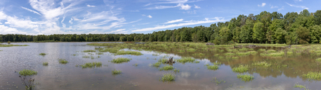 A bright blue sky with wispy clouds abov a panoramic landscape view of a Virginia wetland. Reklamní fotografie