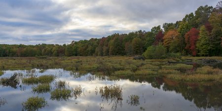 A cloudy sky and autumn foliage is reflected in the mirror-like surface of a Virginia marsh.
