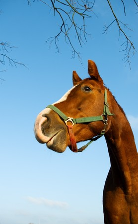 racehorses: a curious horse is looking at