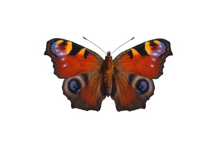 a butterfly is on white background