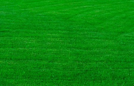 lawn mowing: a green grassy lawn , background