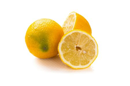 lemons are on white background