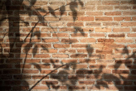 The shadow of tree on the brick wall background. sunlight with shadow of leaves tree on red brick wall. Standard-Bild