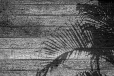Shadows from tropical leaves of palm tree on a wooden background. Blurry soft shadows. gray wood, realistic texture. Background for projects and design.