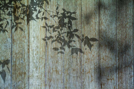 Shadows from tropical leaves on a wooden background. Blurry soft shadows. vintage wood, realistic texture. Background for projects and design. Standard-Bild