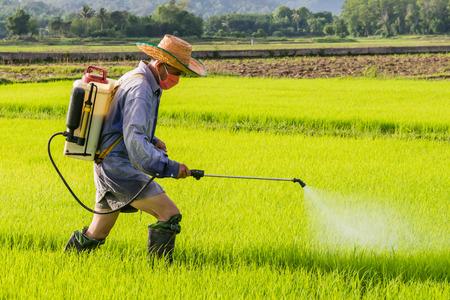 논 필드에 농약을 살포하는 농부. 스톡 콘텐츠