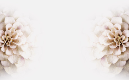 Background of white flowers copy-space Stock Photo