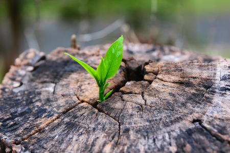 a strong seedling growing in the center trunk tree as a concept of support building a future.
