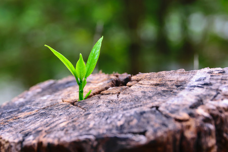 hope concept:  a strong seedling growing in the center trunk tree as a concept of support building a future.